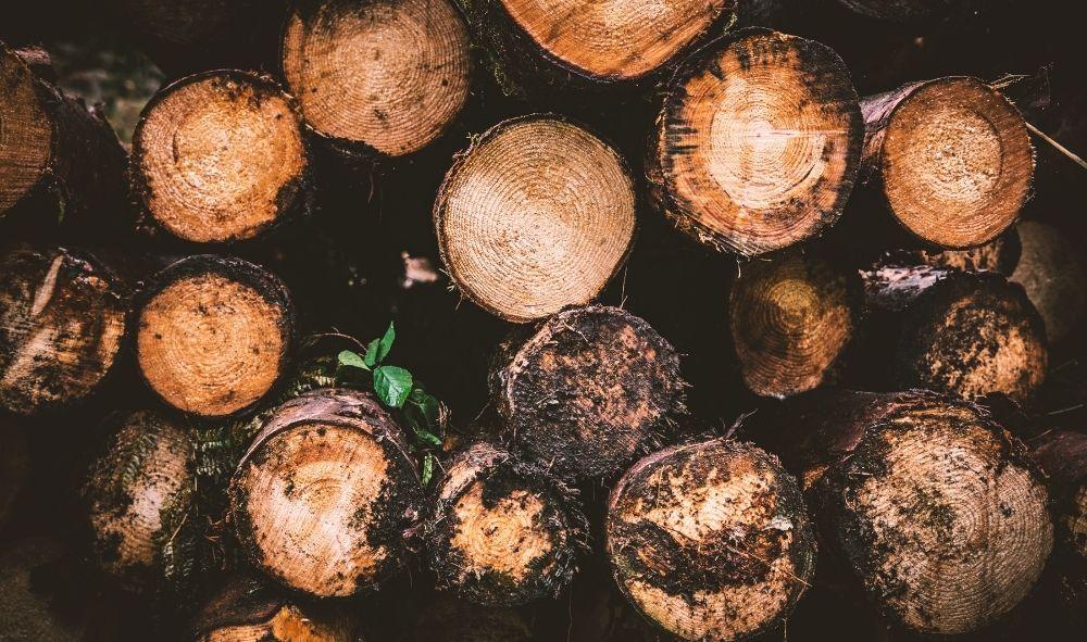 Madera ilegal galicia troncos cortados